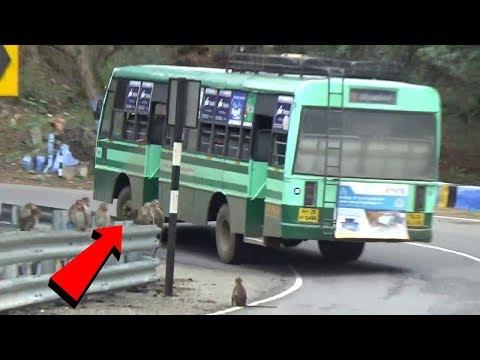 hogenakkal-hairbin-bend-tn-government-bus
