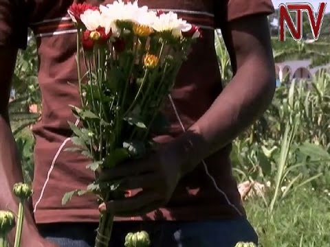 Flower exporters petition trade ministry over cases of workers' exposure to deadly chemicals