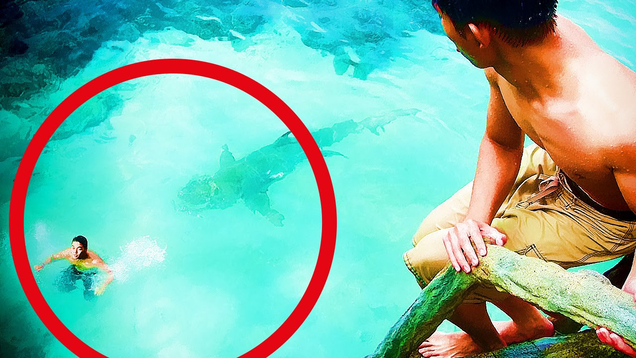 5 Attaques De Requin En Direct ! VIDEOS AUTHENTIQUES ! - YouTube