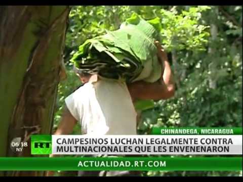 Vivir sin pesticidas, la batalla legal de los campesinos nicaragüenses