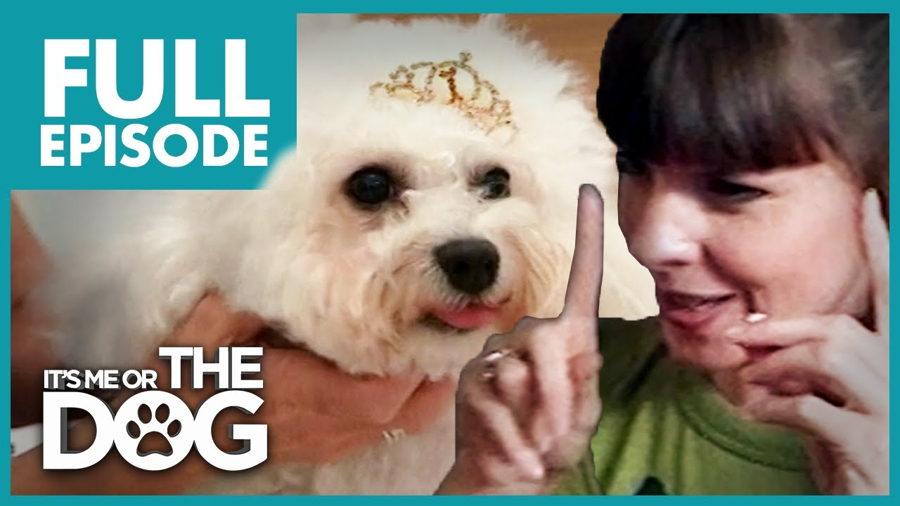 Barking Queen Bichon Frise: Lilly | Full Episode | It's Me or The Dog