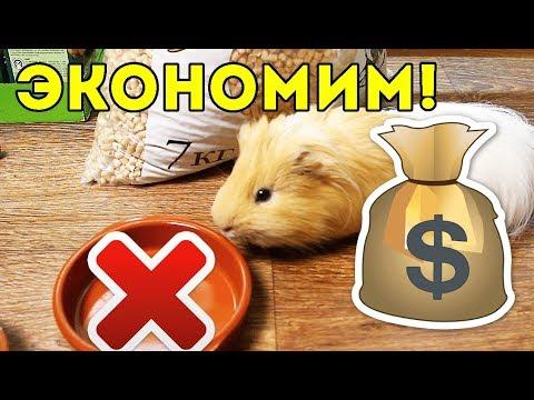 НЕТ ДЕНЕГ! Экономим... ЛАЙФХАКИ / КОРМ И НАПОЛНИТЕЛЬ ДЕШЕВО / SvinkiShow