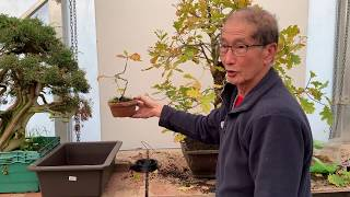 Making an Oak Bonsai