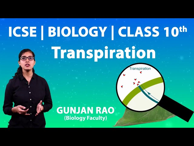 ICSE | Class 10th | Biology | Transpiration | Imp Ques | Difference b/w Transpiration & Evaporation