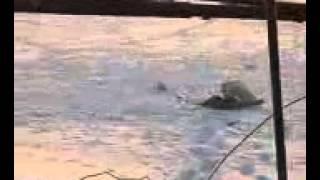 Диалоги о рыбалке. Платный пруд. Россия. Карп, форель