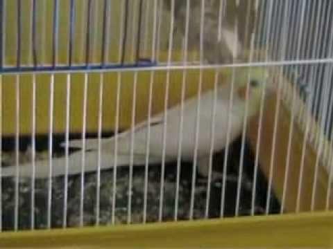 Купить попугая ара - YouTube