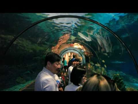 The Traveler's Guide: Sea World - San Diego