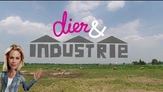 Dier en Industrie