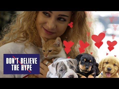 Kittens Vs Puppies: Don't Believe The Hype