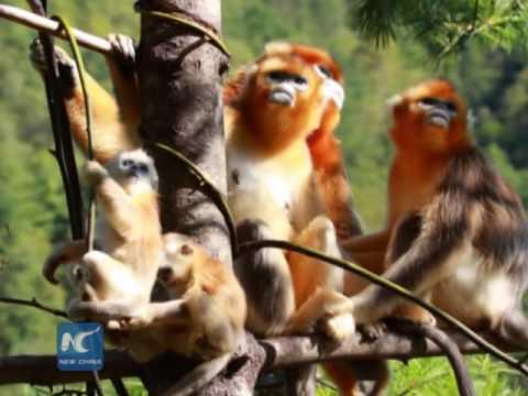 China's Shennongjia added to World Heritage List