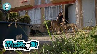"""""""Cuidando perros de la calle"""""""