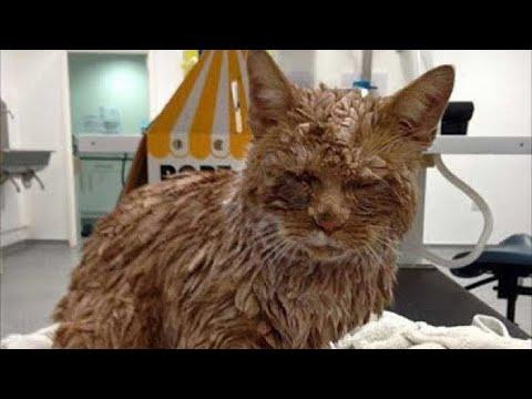 Вопрос: Как пережить муки совести из-за того, что я усыпила кота?