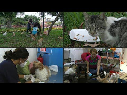 Voluntarios Desafían Al Coronavirus Para Cuidar A Gatos Y Perros En Perú | AFP