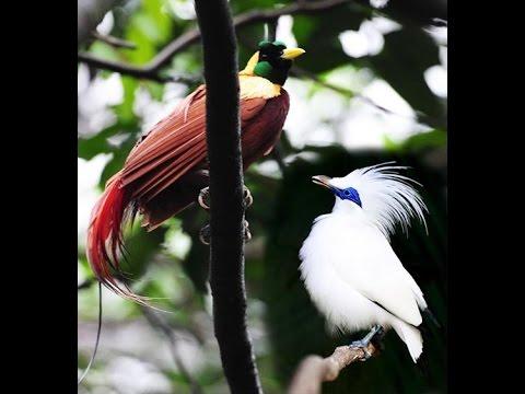 Bird of Paradise and Bali Starling