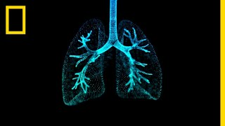 Lungs 101 | National Geographic