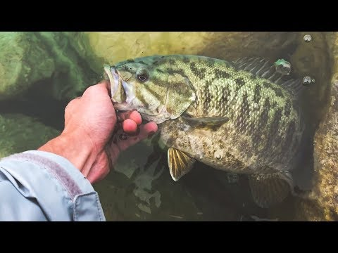 Michigan BANK FISHING With Jerkbaits And Tubes