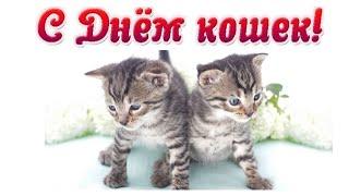 Смешное видео с котами - ДЕНЬ КОШКИ  &  1 марта День кошки
