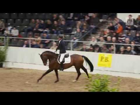 Argento Vivo Und Patick Döller - 29. PB-Schau In Verden