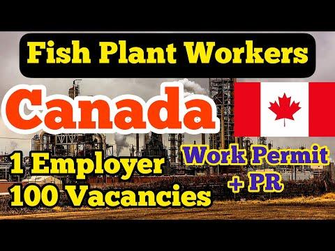 Fish Plant Worker | Canada | Fisheries Jobs in Canada | Canadian Dream | Dream Globe | Canada Work