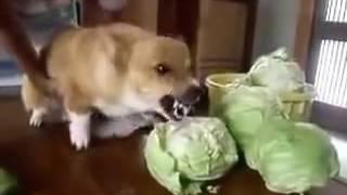 Пятый день на капустной диете!!!)))