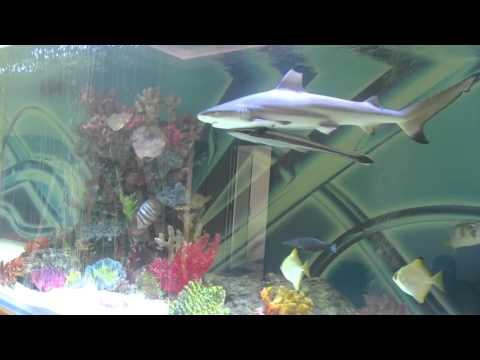 Huge private shark tank with fish