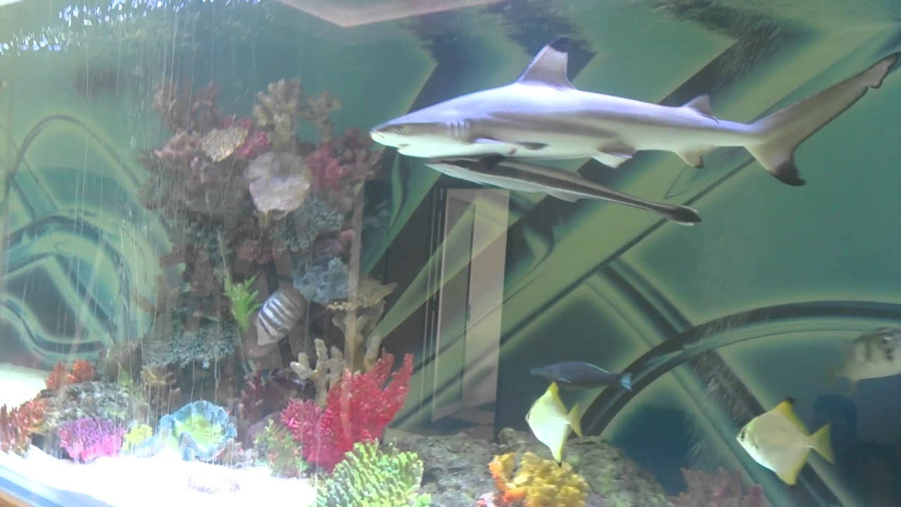 Fish tank sharks - Huge Private Shark Tank With Fish