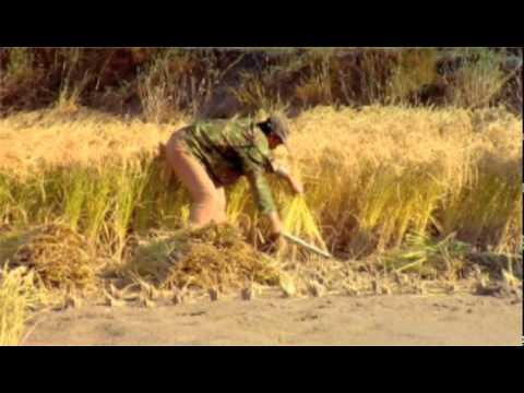 Jilin Farmland Project to Feed Over 11 Million People