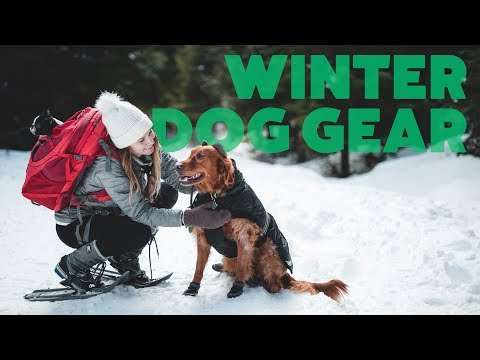the-best-winter-dog-gear-|-the-dog-people-review-|-rover.com