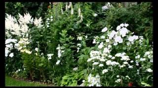 видео Готовые схемы цветников и клумб из многолетников и однолетников