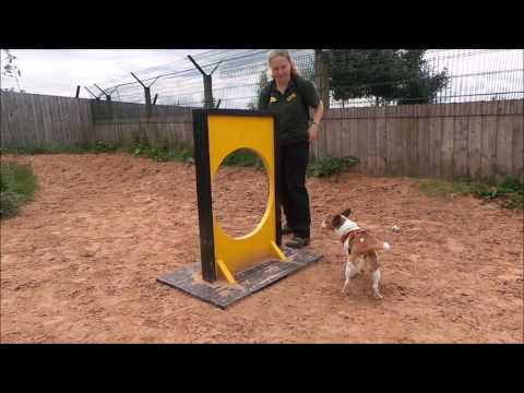 Dogs Trust Loughborough - Vernon