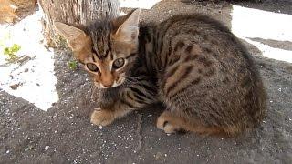 #Коты Котенок познает мир Котенок поймал мышку)