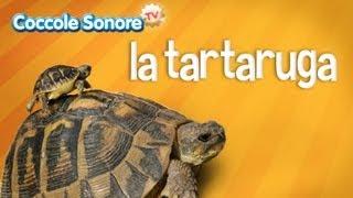 La tartaruga - Documentari per bambini di Coccole Sonore