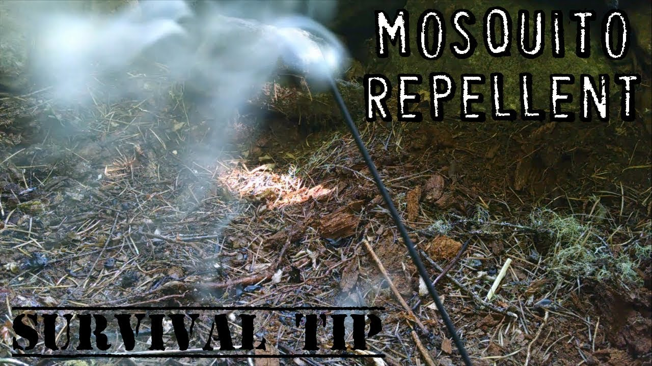 Sandalwood Incense Mosquito Repellent | Survival Tips