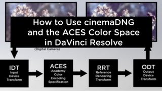 DaVinci Resolve 9.1 - How to Use cinemaDNG with ACES Color Space - Blackmagic Camera, Ikonoskop