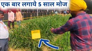 हरा चारा 12 महीने 5 साल तक ऐसे पाए|Napier grass cultivation in hindi 9350352605