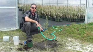 Planting an Olive Tree with Georgia Olive Farms
