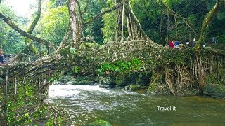Living Root Bridge at Mawlynnong, Shillong – Marvel of human engineering in harmony with Nature