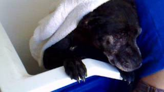 monty's bath time