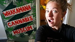 STAYING IN A CANNABIS MUSEUM!! Dunedin, New Zealand