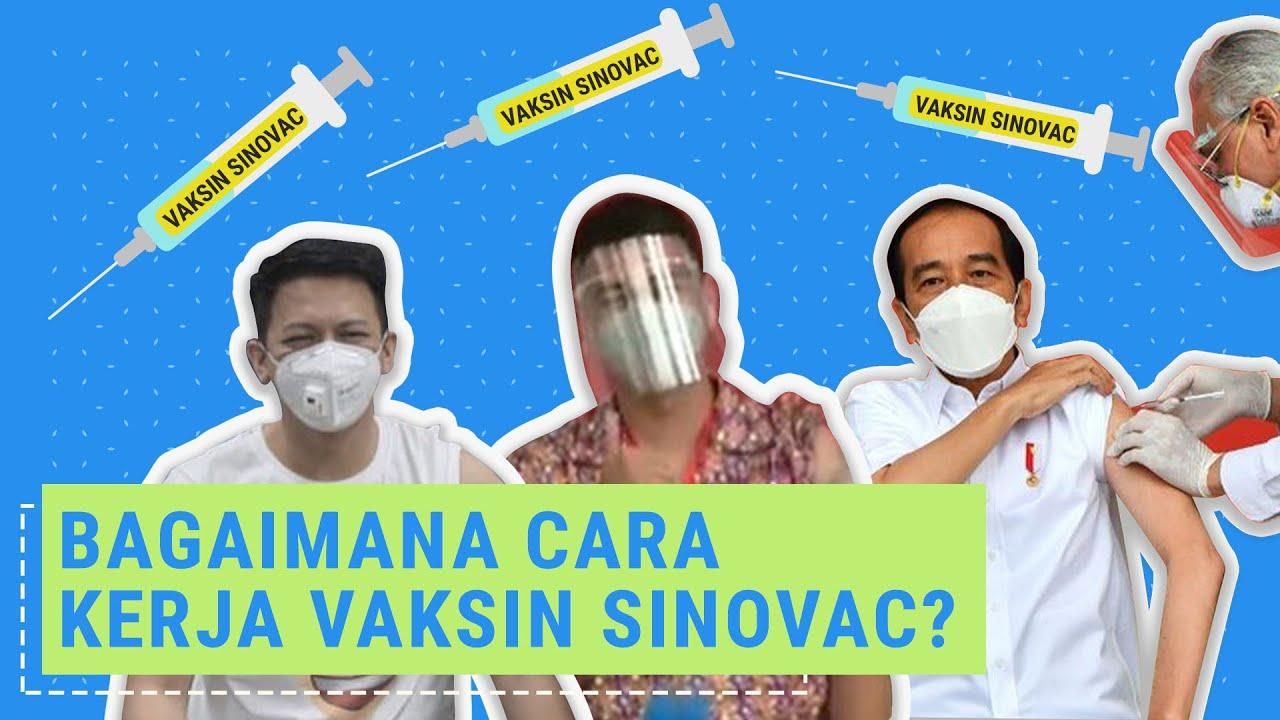 Bagaimana Cara Kerja Vaksin Covid 19 Sinovac Youtube