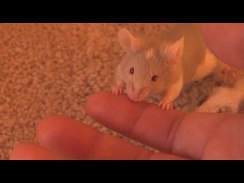 mouse bite
