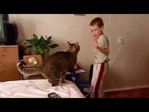 best funny video--cat attack on a child