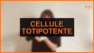 Biologie - Cellule totipotente