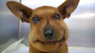 Dog's and Cats who got stung by bees and it's kinda funny