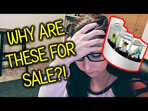 Rating The Best And Worst Betta Fish Tanks For Sale Online (Pet YouTuber Reaction)