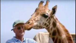 Animal conservation - freedom for giraffes - BBC wildlife