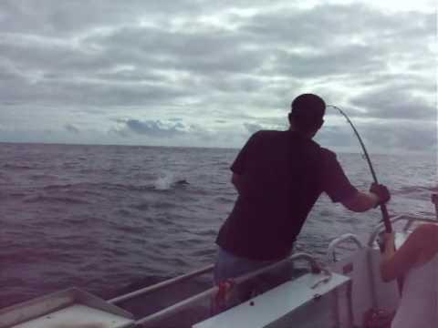 blue marlin hookup