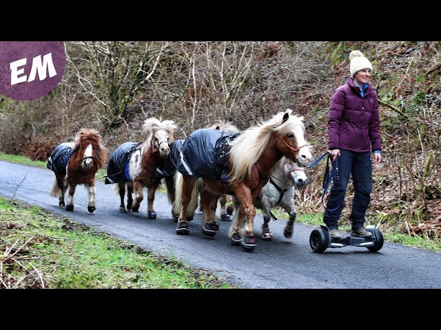 Hoverboarding with my Mini Pony Team