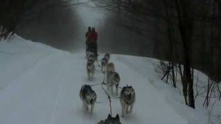 Dog-sledding With Siberian Huskies In Vermont