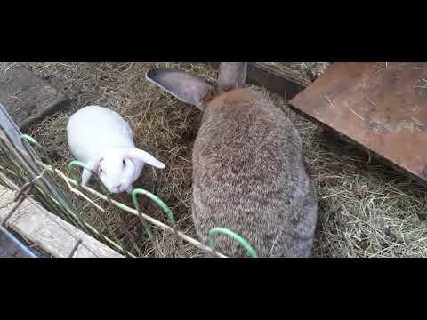 Mijn konijnen in de tuin.